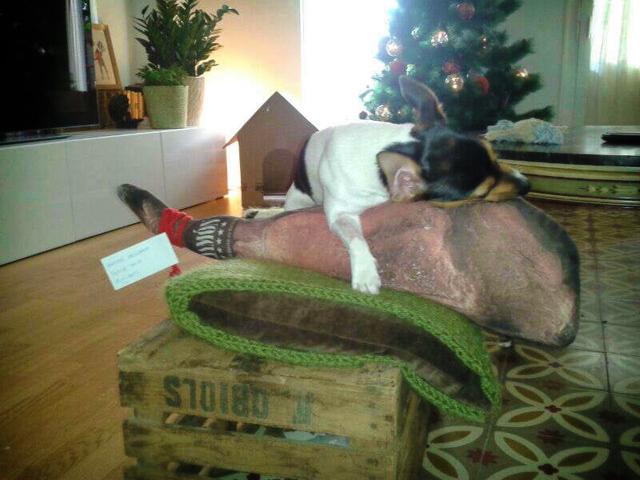 Perro duerme su siesta sobre un jamón